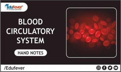 Blood Circulatory System Hand Written Notes