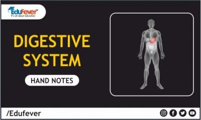 Digestive System Hand Written Notes