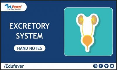 Excretory System Hand Written Notes