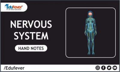 Nervous System Hand Written Notes