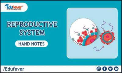 Reproductive System Hand Written Notes