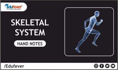 Skeletal System Hand Written Notes