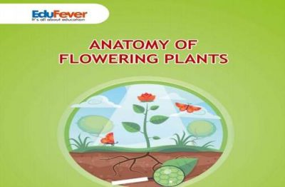 Anatomy of Flowering Plants Revision Notes