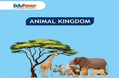 Animal Kingdom Revision Notes
