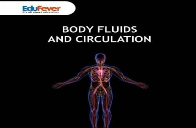 Body Fluids and Circulation Revision Notes