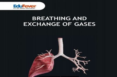 Breathing and Exchange of Gases Revision Notes