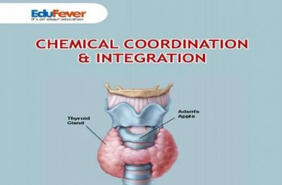Chemical Coordination & Integration Revision Notes