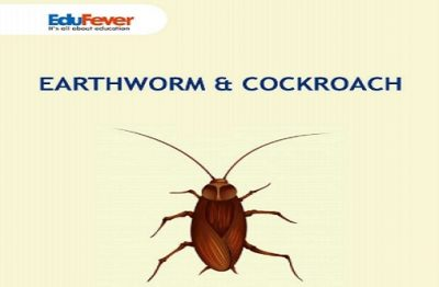 Earthworm & Cockroach Revision Notes