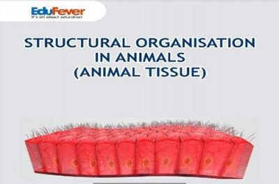 Structural Organisation in Animals Revision Notes